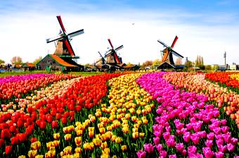 Netherlands is known for a flat landscape of canals, tulip fields, windmills